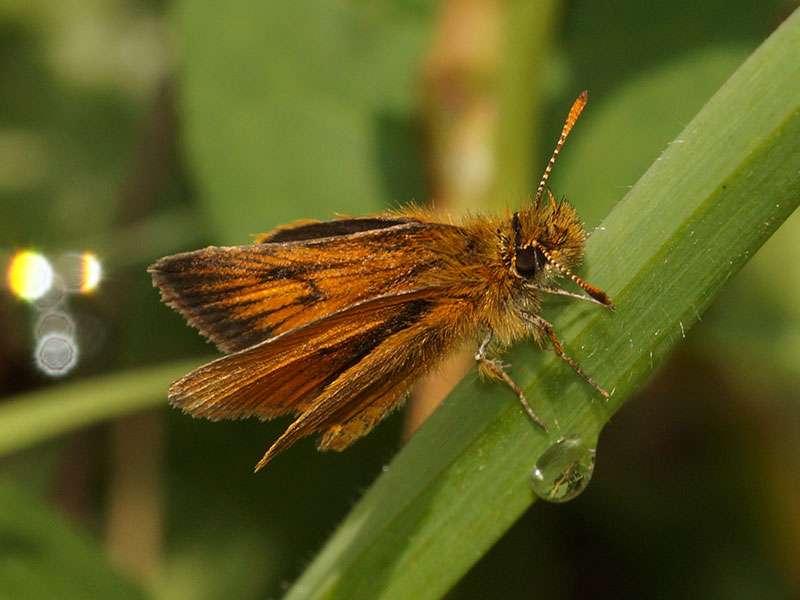 Unbestimmte Schmetterlingsart Nr. 298; Foto: 25.12.2017, Wanderweg zum Condor-Machay-Wasserfall
