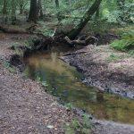 Hiesfelder Wald