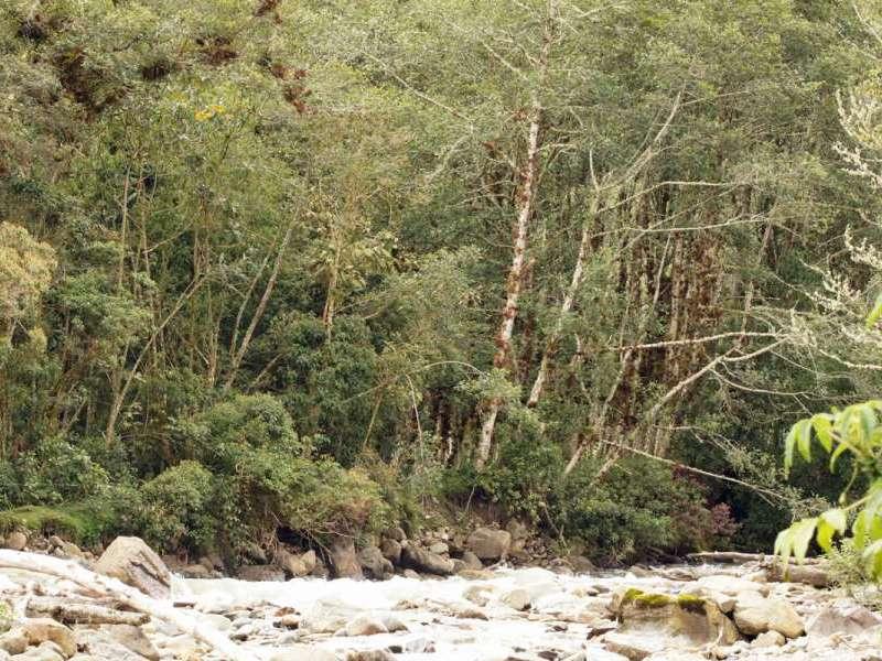 In der Nähe der Guango Lodge reicht der Wald bis ans Ufer des Río Quijos; Foto: 07.12.2017, Nähe Papallacta