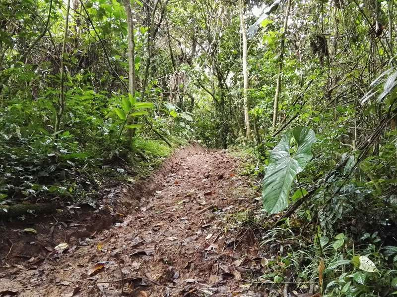 Einer der Wanderwege, die an der Cabañas San Isidro Lodge beginnen; Foto: 08.12.2017, Nähe Cosanga