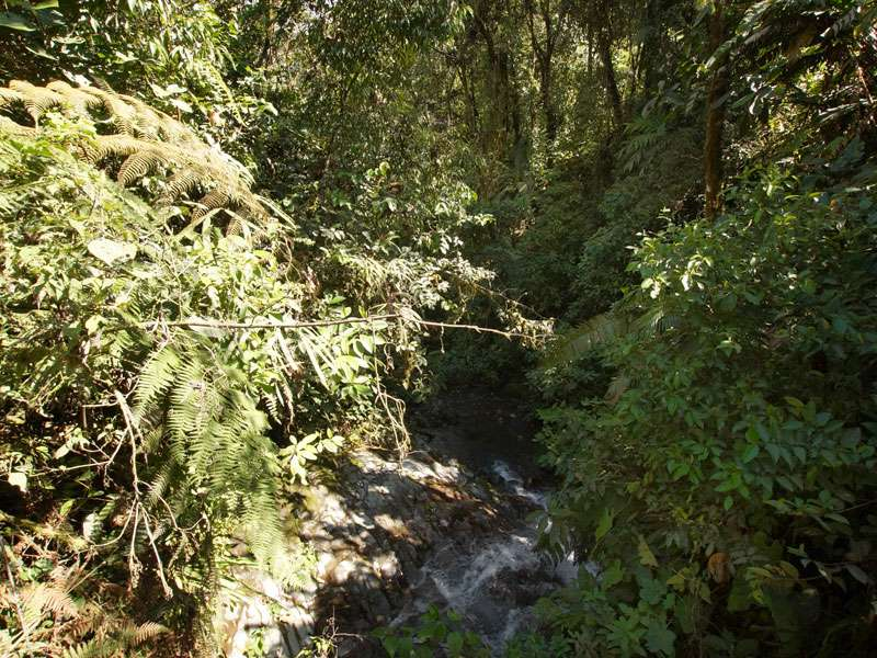 Bachlauf in der Nähe des Aussichtspunktes am San-Rafael-Wasserfall; Foto: 09.12.2017, Nähe San-Rafael-Wasserfall