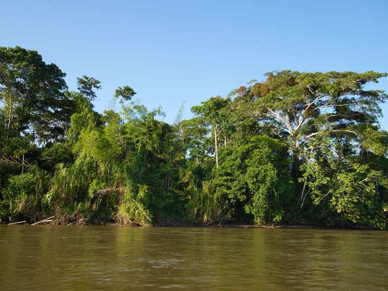 Dichter Wald bedeckt die Insel des Sumak Allpa Projektes; Foto: 10.12.2017, Nähe Puerto Francisco de Orellana