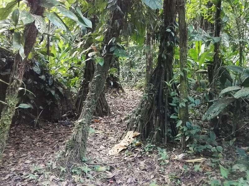 Weg im Wald auf der Insel des Sumak Allpa Projektes; Foto: 10.12.2017, Nähe Puerto Francisco de Orellana