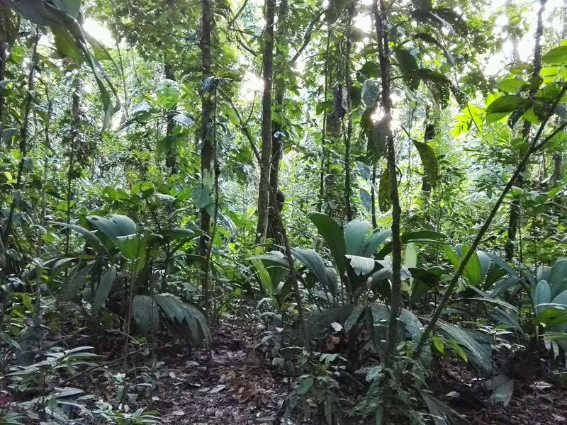 Der Wald auf der Insel des Sumak Allpa Projektes; Foto: 10.12.2017, Nähe Puerto Francisco de Orellana
