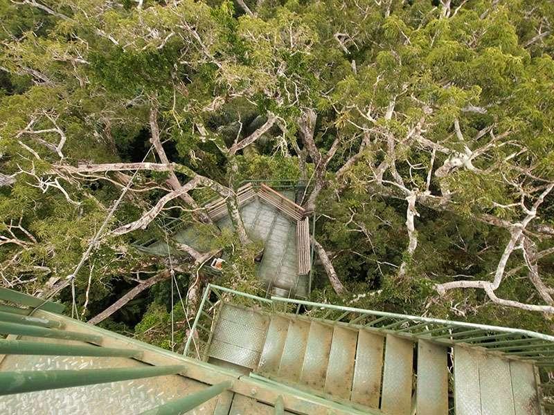In einen riesigen Regenwaldbaum wurden Treppen gebaut, die zur Beobachtungsplattform in 36 m Höhe führen; Foto: 11.12.2017, Napo Cultural Center