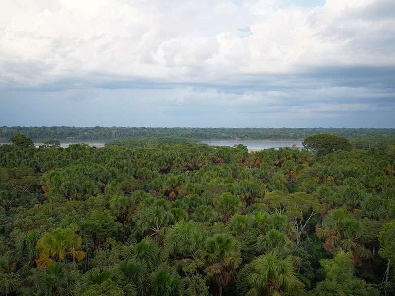 Vom Aussichtsturm des Napo Cultural Centers aus kann man den Río Napo sehen; Foto: 11.12.2017