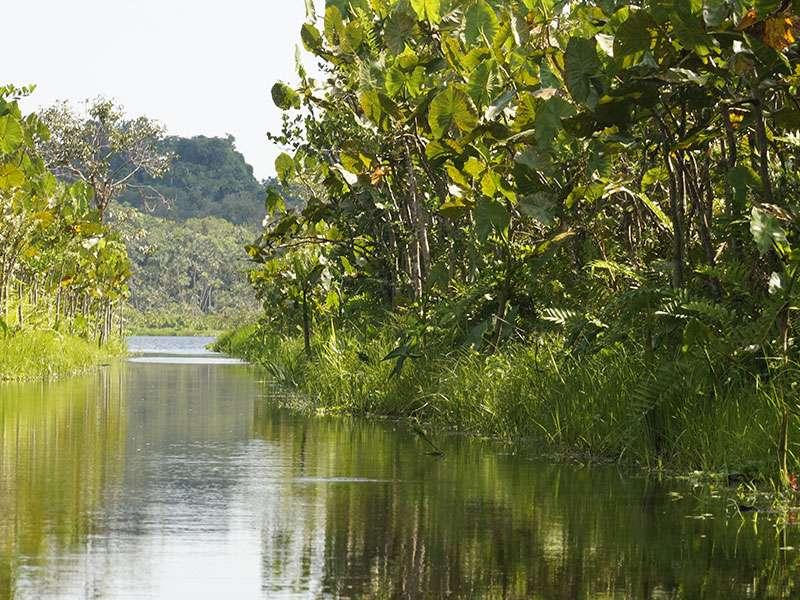 Durch diesen Kanal geht es zur dahinter liegenden Lagune Pilchicocha, an der die Sacha Lodge liegt; Foto: 15.12.2017