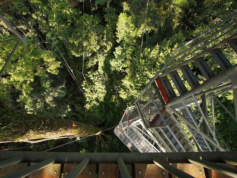 In 43 m Höhe über dem Waldboden befindet sich der Beobachtungsturm der Sacha Lodge in einem Kapokbaum; Foto: 16.12.2017