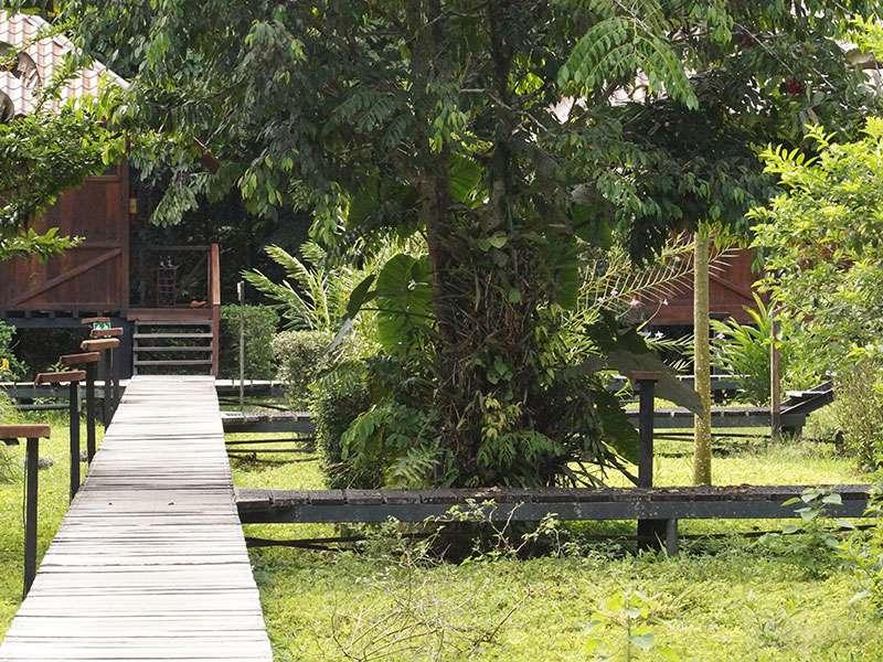 Die Gebäude der Sacha Lodge stehen zum Schutz vor Hochwasser auf Stelzen und sind durch Holzstege miteinander verbunden; Foto: 18.12.2017