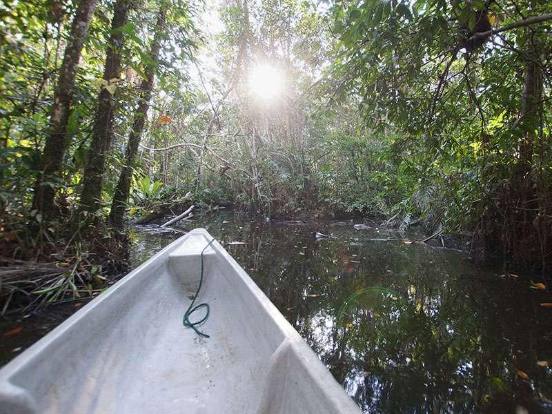 Die Kanäle rund um die Sacha Lodge können mit dem Kanu befahren werden; Foto: 18.12.2017