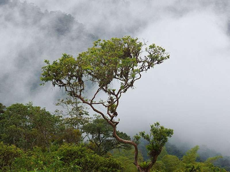 Die oft tief hängenden Wolken versorgen die dichte Vegetation in Mindo mit Feuchtigkeit; Foto: 23.12.2017, Mindo