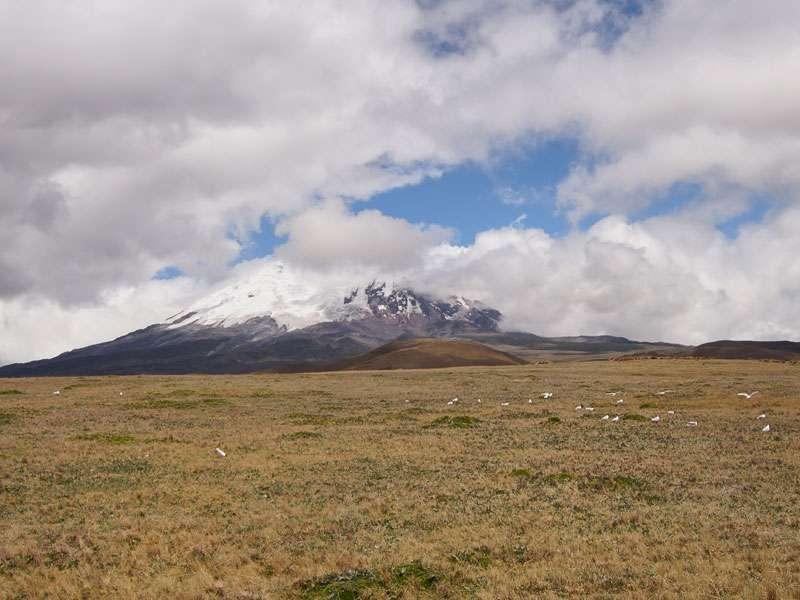 An den Flanken des Antisana ist seine Eisschicht zu erkennen - im Vordergrund sind einige Andenmöwen zu sehen; Foto: 24.12.2017, Reserva Ecológica Antisana