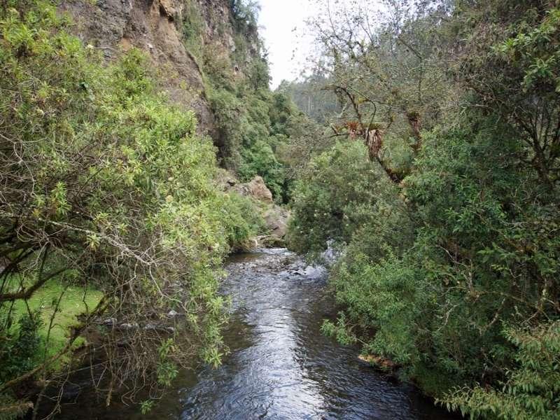 Der Río Pita fließt durch eine enge, mit üppiger Vegetation bestandene Schlucht; Foto: 25.12.2017, Wanderweg zum Condor-Machay-Wasserfall