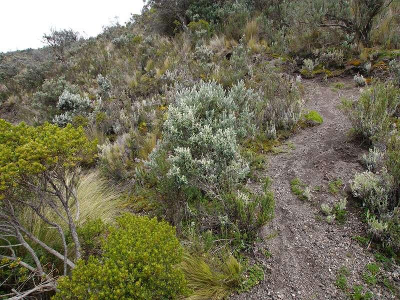 Die Vegetation im Nationalpark ist in höheren Lagen recht niedrig; Foto: 26.12.2017, Cotopaxi-Nationalpark