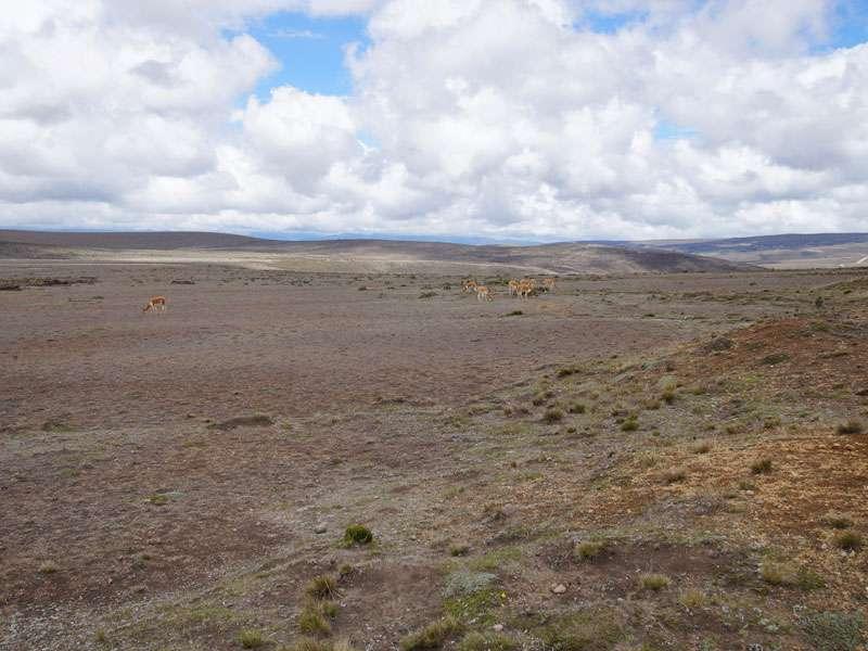 Auf den weiten Ebenen im Chimborazo-Nationalpark sind Vikunjas und einige andere an den Lebensraum angepasste Tiere zu Hause; Foto: 27.12.2017, Foto: 27.12.2017, Reserva de Producción de Fauna Chimborazo