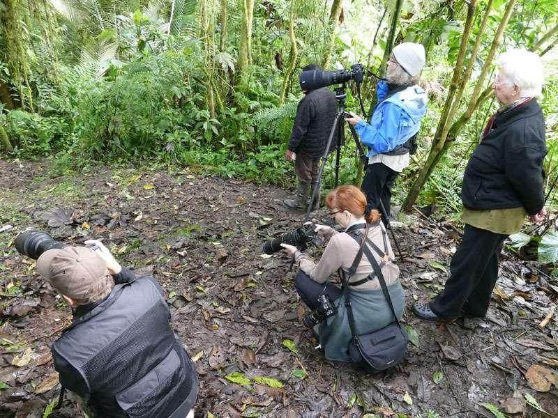 Kameracheck beim Warten auf den Weißbauch-Ameisenpitta; Foto: Ralph Sommer/Ecuador-Discover.de