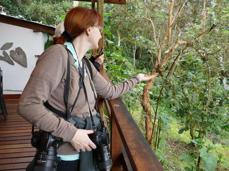 Matschige Mango in der Hand und Kamera-Vollbehang, aber das Vögelchen konnte ich nicht selbst fotografieren ...; Foto: Ralph Sommer/Ecuador-Discover.de