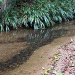 Quebrada Agua Clara