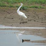 Canoabo-Stausee: Embalse El Peñon