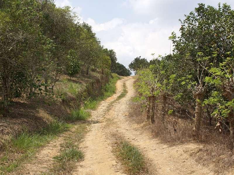 Auf Wegen wie diesen kann man die Umgebung der Casa Maria zu Fuß erkunden; Foto: 16.04.2013, Nähe Bejuma