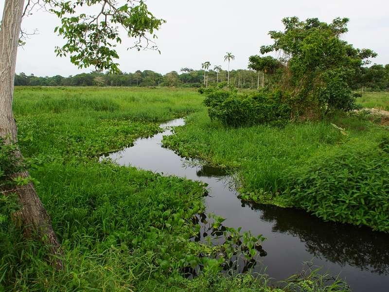 Einer der vielen Wasserläufe im Sumpfgebiet; Foto: 21.04.2013, Nähe San Pablo