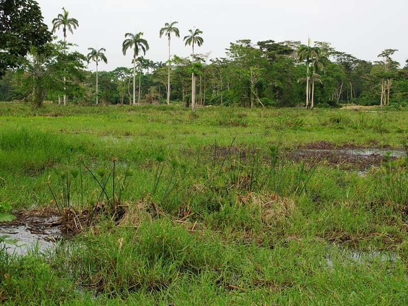 Feuchtwiese im Sumpfgebiet; Foto: 21.04.2013, Nähe San Pablo