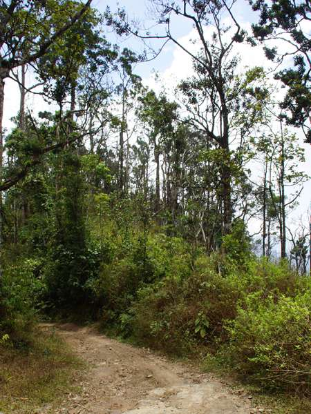Im Bergnebelwald am Cerro San Isidro; Foto: 22.04.2013, Nähe Montalbán