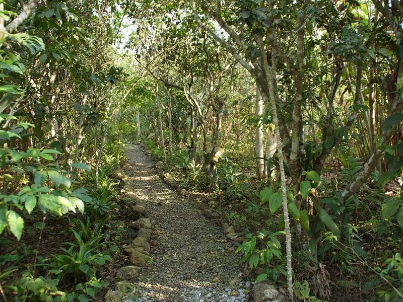 Kleiner Wanderweg auf dem Gelände der Casa Maria; Foto: 22.04.2013, Nähe Bejuma